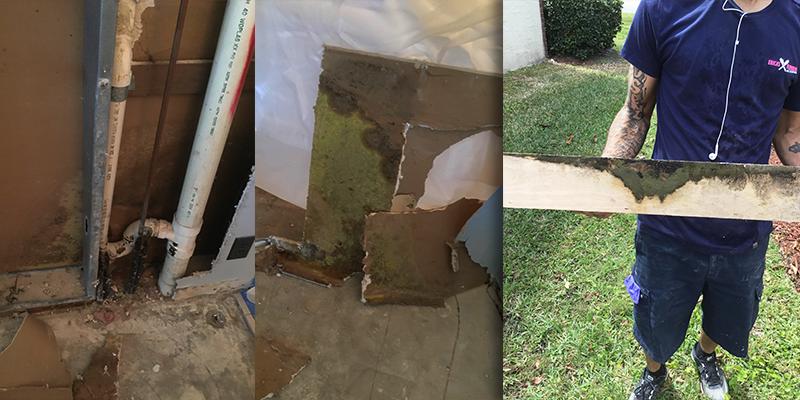 Florida Mold Restoration Job 2