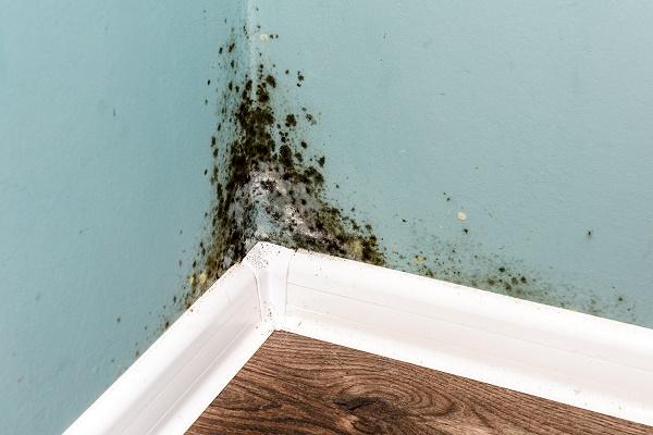 Boca Raton Mold Removal
