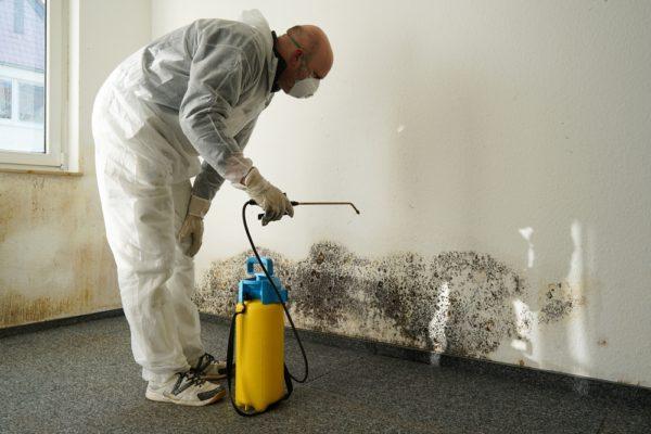 Boca Raton Mold Remediation