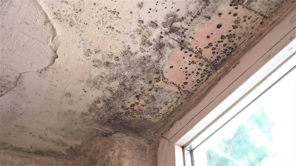 Coral Springs Mold Remediation