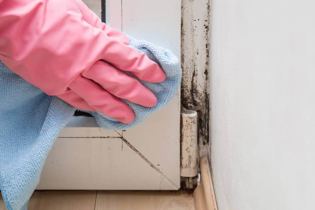 Coral Springs Mold Removal